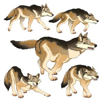 Gruppe von isolierten wölfe vektor-illustration