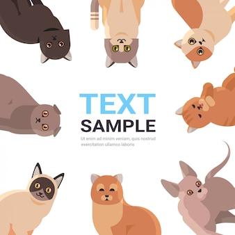 Gruppe von reinrassigen katzen setzen flauschige entzückende karikaturtiere inländische kitty-heimtierkonzept-flache porträtkopie raum