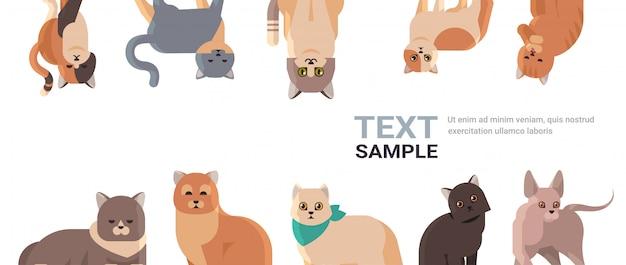 Gruppe von reinrassigen katzen setzen flauschige entzückende karikaturtiere inländische kitty-heimtierkonzept-flache porträtkopienraum horizontal