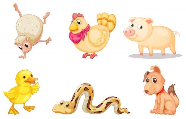 Gruppe von tieren