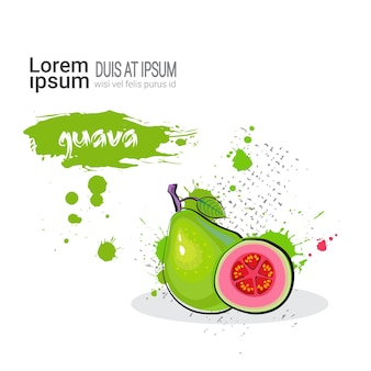 Guave handgezeichnete aquarell obst