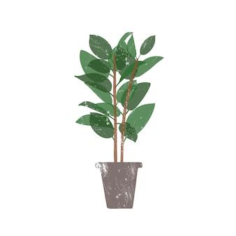 Gummipflanze in flacher vektorillustration des keramischen topfes. ficus, trendige immergrüne topfpflanze isoliert auf weißem hintergrund. innenblume, inländisches dekoratives grün. designelement aus gummibuchse.