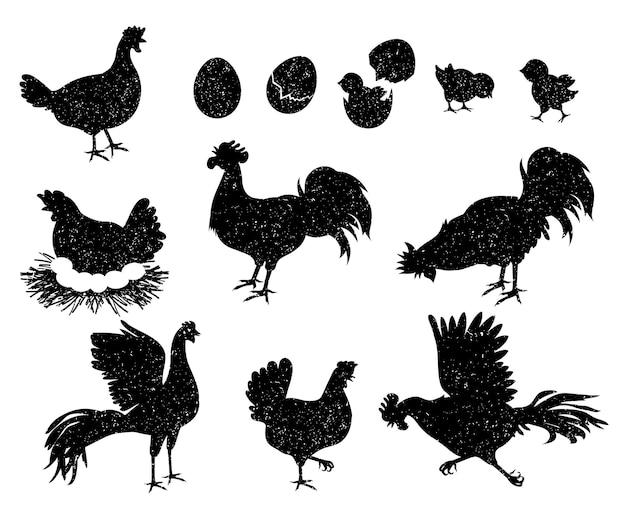 Hahn-, henne- und hühnersilhouetten für vintage-logos und etiketten. geflügelsymbole für fleisch- und eiprodukte. hausvögel familie vektor-set. wachsendes baby aus eierschale geschlüpft, nest mit eiern