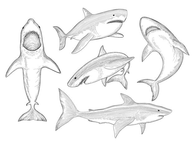 Hai hand gezeichnet. wasser kreatur, die großen monsterfisch mit mundskizzensammlung fließt