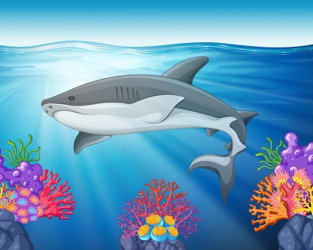 Haifischschwimmen im meer