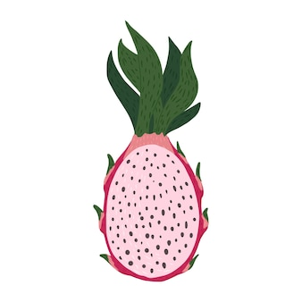 Halbe drachenfrucht isoliert. rosa farbe der tropischen nahrung in gekritzelartvektorillustration.