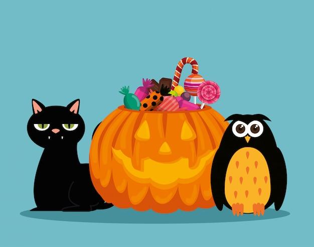 Halloween-karte mit kürbis und eule