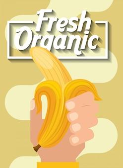 Hand, die frische organische fruchtbanane hält