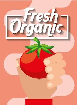 Hand, die frische organische gemüsetomate hält