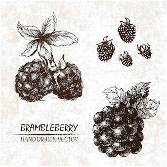 Hand gezeichnet brambleberry design