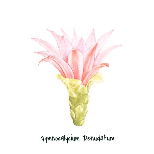 Hand gezeichnet gymnocalycium denudatum spinne kaktus
