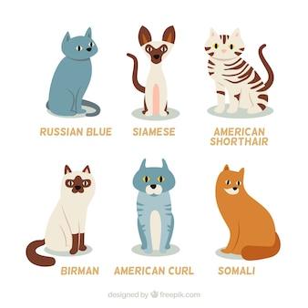 Hand gezeichnet rasse katzen
