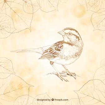 Hand gezeichnet retro vogel