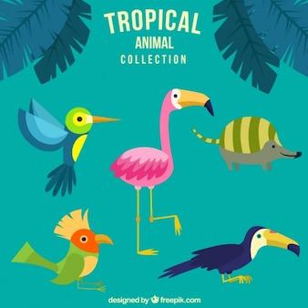 Hand gezeichnet schöne tropische tiere