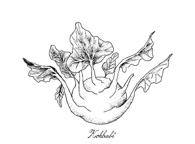 Hand gezeichnet vom frischen kohlrabi auf weißem hintergrund