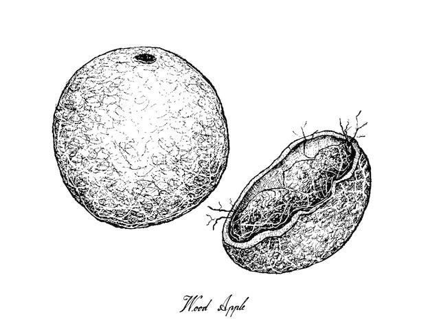 Hand gezeichnet vom hölzernen apfel