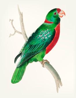 Hand gezeichnet vom kurzen angebundenen grünen parakeet