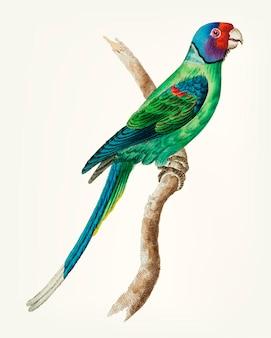 Hand gezeichnet vom langen angebundenen grünen parakeet