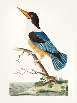 Hand gezeichnet vom schwarz-mit einer kappe bedeckten eisvogel