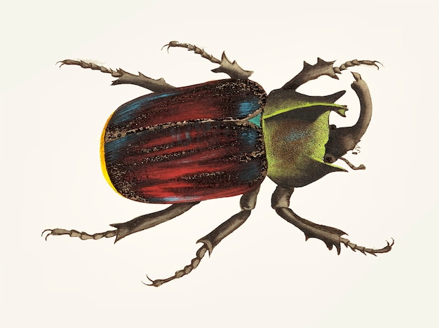 Hand gezeichnet vom schwarzen scutellated käfer