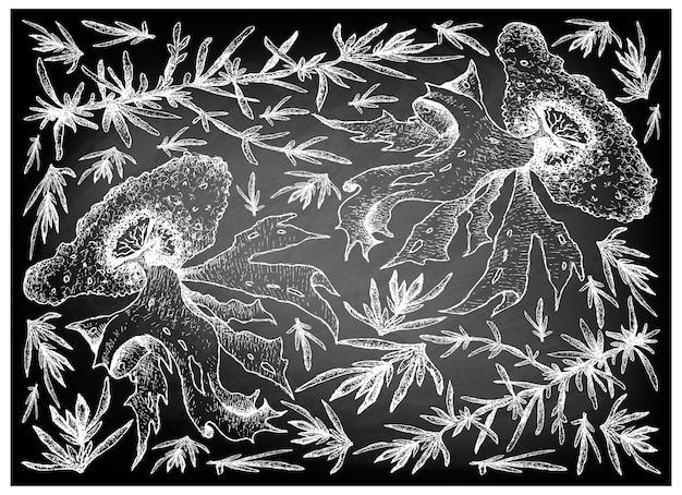 Hand gezeichnet vom seegemüse oder von der meerespflanze auf tafel
