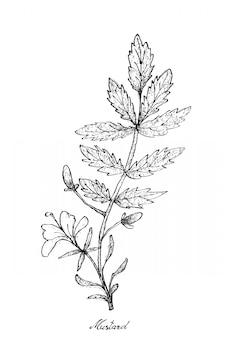 Hand gezeichnet vom senf auf weißem hintergrund