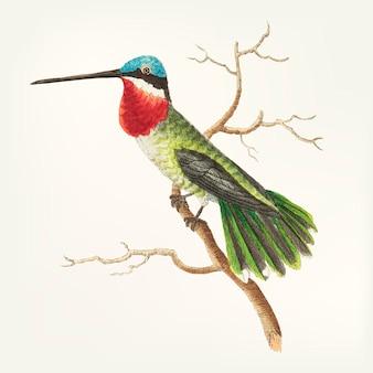 Hand gezeichnet vom vogel