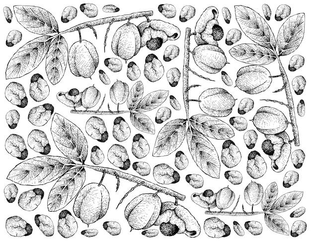 Hand gezeichnet von ackee fruits auf weißem hintergrund