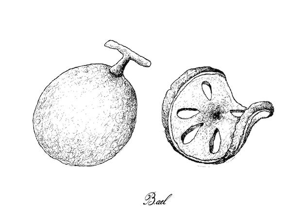 Hand gezeichnet von bael-früchten auf weißem hintergrund