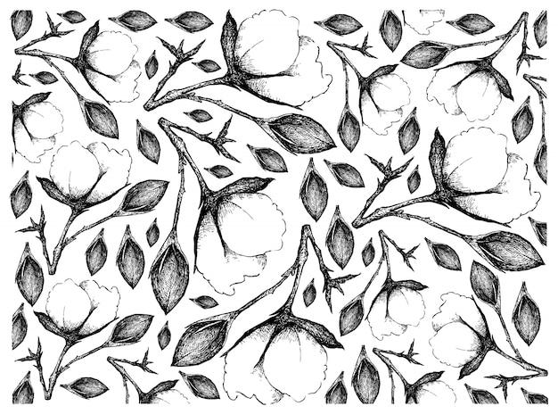 Hand gezeichnet von baumwollblumen mit knospenhintergrund
