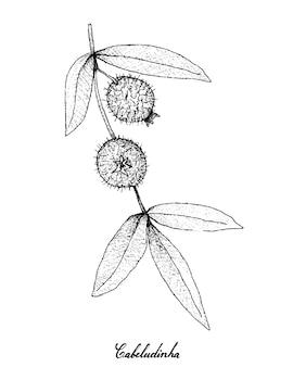 Hand gezeichnet von cabeludinha-früchten