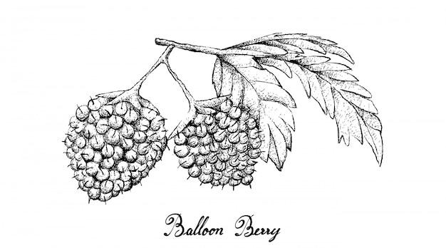 Hand gezeichnet von den ballon-beeren auf weißem hintergrund