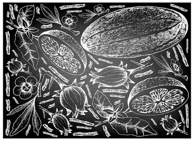 Hand gezeichnet von den frischen früchten auf weißem hintergrund