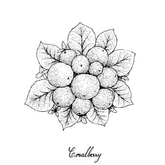 Hand gezeichnet von den reifen korallenbeeren