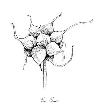 Hand gezeichnet von der baumzwiebel auf weißem hintergrund
