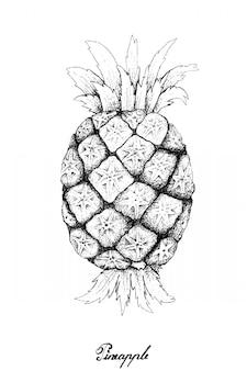 Hand gezeichnet von der frischen süßen organischen ananas