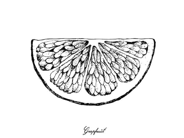 Hand gezeichnet von der pampelmusenfrucht
