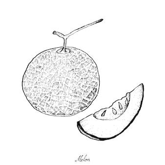 Hand gezeichnet von der reifen und süßen melone