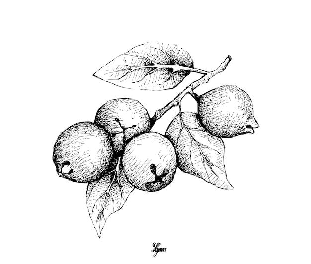 Hand gezeichnet von der zitronen-guave auf weiß