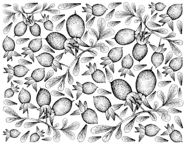 Hand gezeichnet von diospyros lycioides auf weißem hintergrund