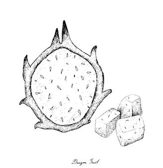 Hand gezeichnet von frischem reifem dragon fruit