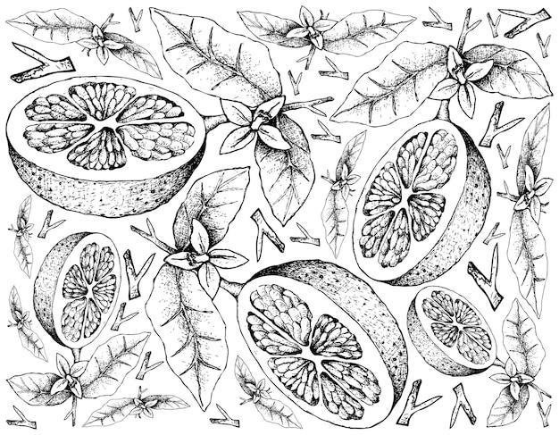 Hand gezeichnet von grapefruit-frucht-illustration Premium Vektoren