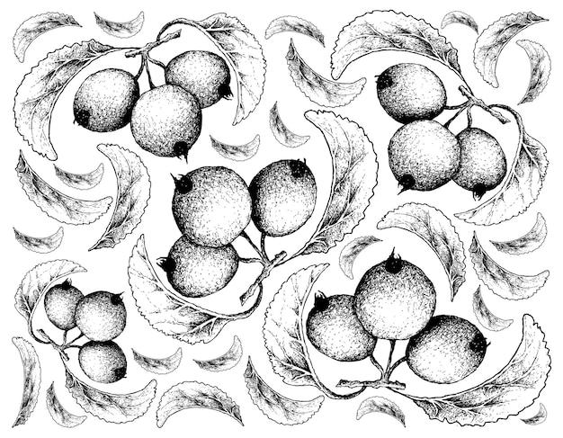 Hand gezeichnet von holzapfelfrüchten auf weißem hintergrund