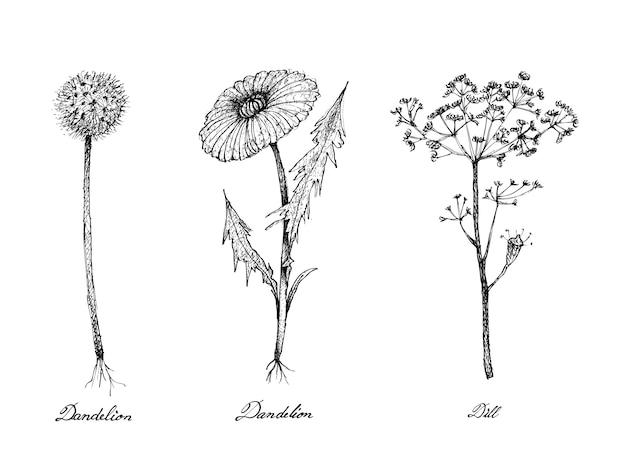 Hand gezeichnet von löwenzahn und dillpflanzen