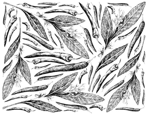 Hand gezeichnet von lorbeer und chilischoten