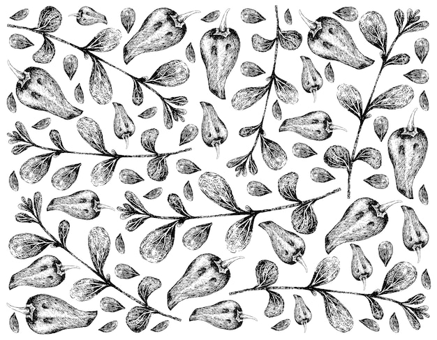 Hand gezeichnet von majoran und paprika