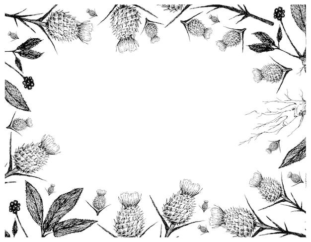 Hand gezeichnet von mariendistel und ginseng pflanzen rahmen