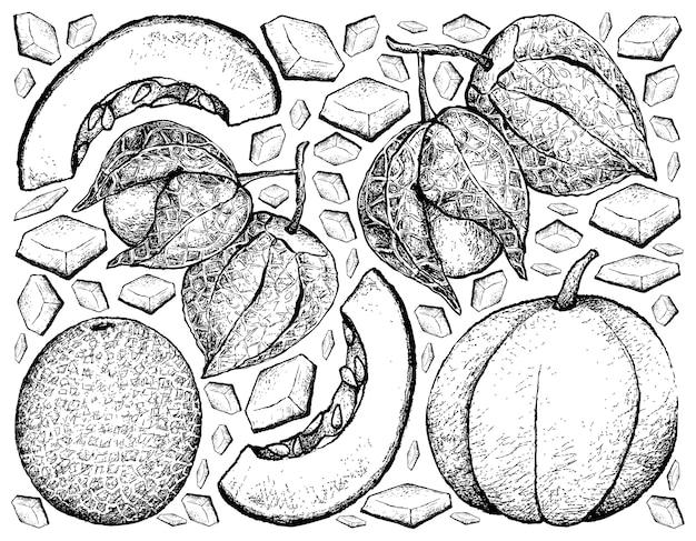Hand gezeichnet von muskmelon und von kap-stachelbeer-hintergrund