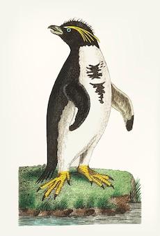 Hand gezeichnet von pinguin mit haube