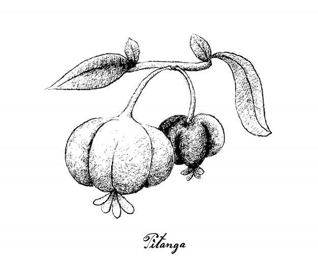 Hand gezeichnet von pitanga-früchten auf weißem hintergrund